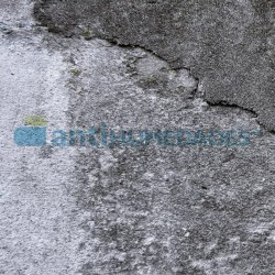 Superficie afectada de manchas blancas por salinidad o eflorescencias