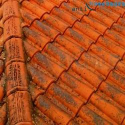 Tejado con verdín y hierba Limpiador AntiHumedades para aplicar en Tejados Fachadas y Suelos
