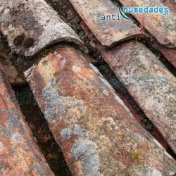 Tejado afectado por moho, musgo y verdín limpiador de tejados antihumedades