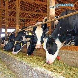 Epoxi W Base Agua sin disolventes resistente para comederos de animales