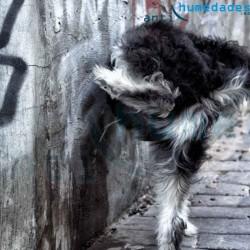 Anti orines de perros de larga duración