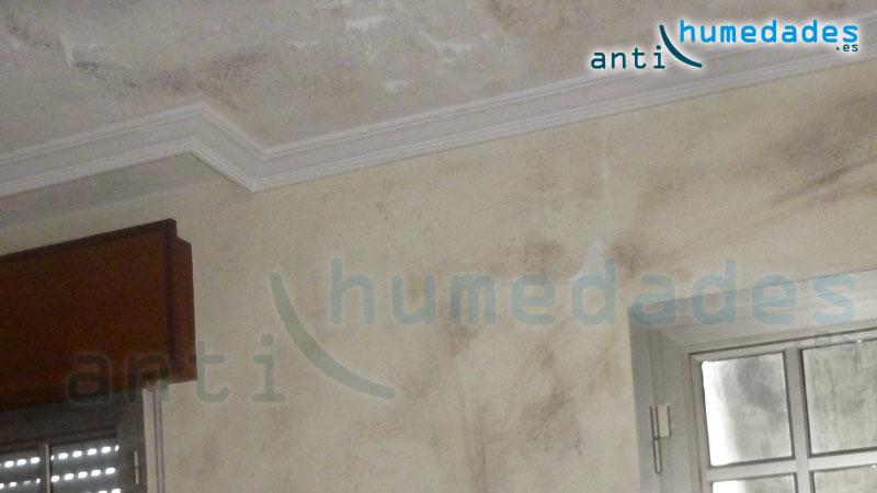 Moho en paredes y techos por humedades prolongadas - Moho en paredes ...