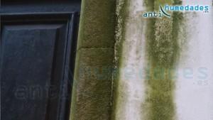 Manchas de moho y verdín en paredes y tejados