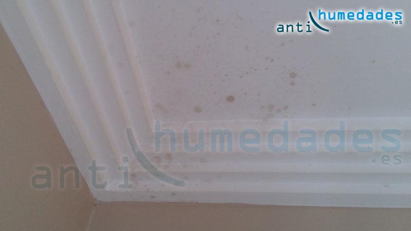 Detalle de hongos en techo y cornisa provocados por condensación