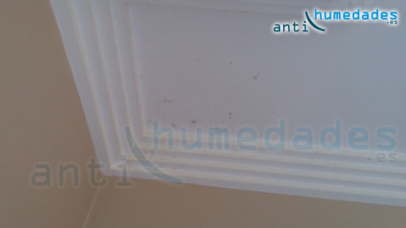 Manchas de moho en techos