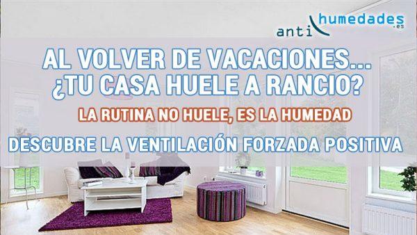 La humedad genera olor en la vivienda - Soluciones para mosquitas de la humedad ...