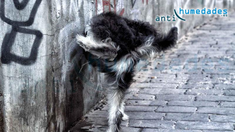 Las sales minerales que contiene la orina de perros y personas deteriora el estado de las fachadas