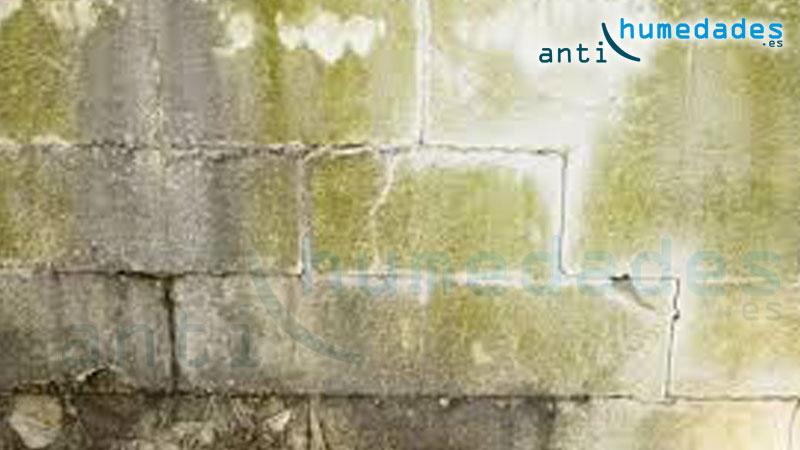 Manchas de verdin y moho en fachadas
