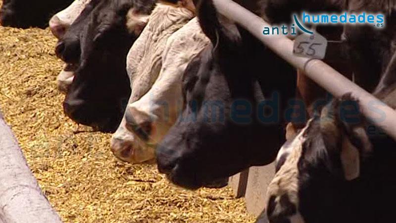 Un alto porcentaje de infecciones en animales se producen por la falta de higiene en los comederos