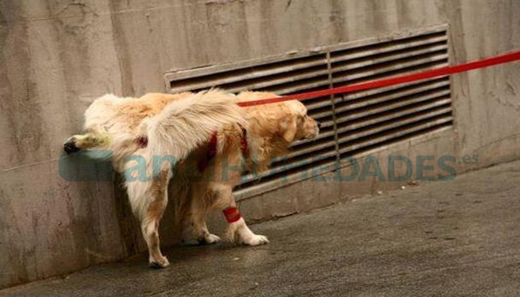 Los orines de perros sobre el mobiliario urbano se solucionan con Repelente de Orines Eco Temporal