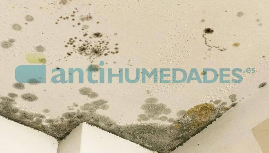 Humedades por condensación y manchas de moho en techos y paredes