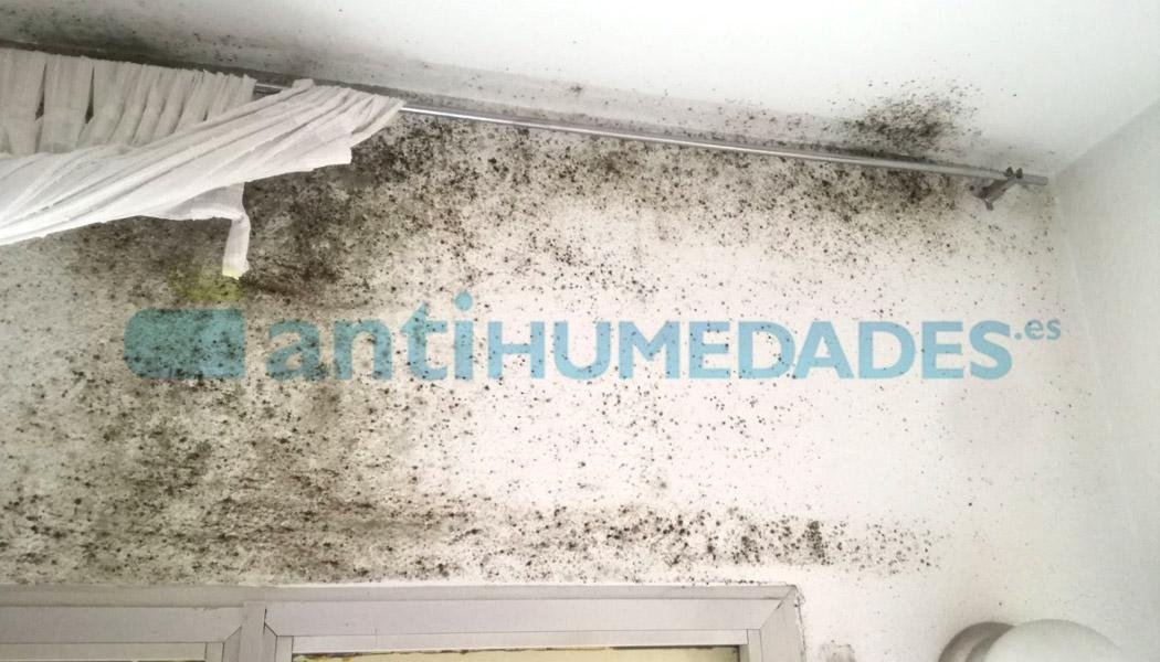 El detergente limpiador de Idroless es perfecto para limpiar las manchas de moho y verdín causados por la humedad