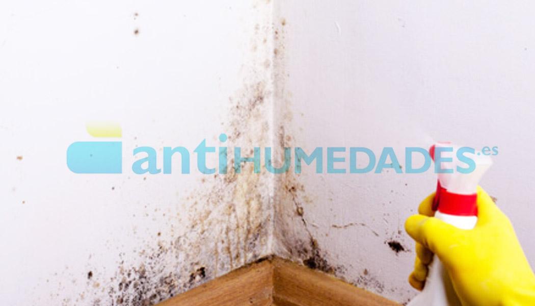 Limpiar manchas de humedad con Detergente Idroless