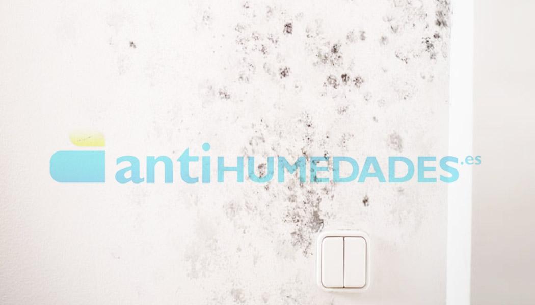 El detergente limpiador ecológico sin disolventes de Idroless limpia moho y verdín en techos y paredes