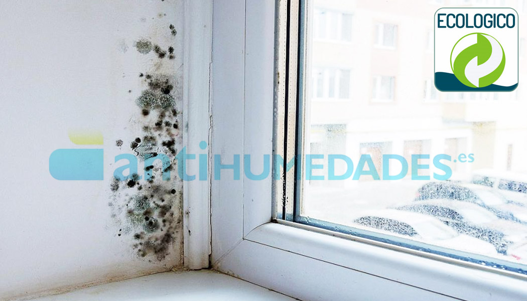 Limpiador de moho y humedades ecológico de Idroless